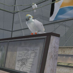 Animal Cockatoo