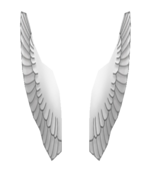 Wings Front
