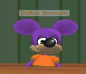 Dallasborealis