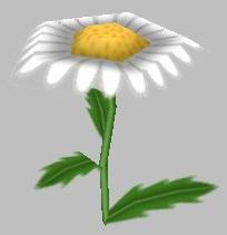 Midsummer Daisy