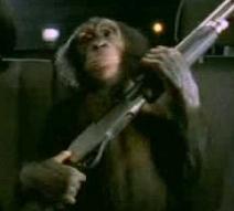 Monkey with gun