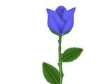 Istilla Rose