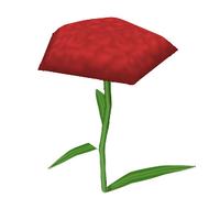 Hybrid Carnation