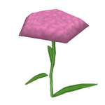 What-in Carnation