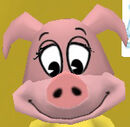 Normal pig head