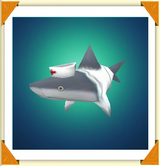 Ttr-fish-nurse-shark