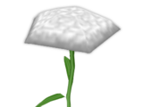 Side Carnation