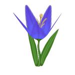 Indubitab Lily