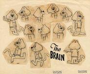 Brainmodelsheet