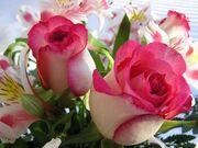Imagini-fiore-gratis(2)