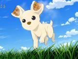 Chihuahuaffle