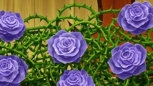 Morning Rose2