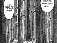 Cedr Bishoku (manga)