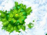 Ozone Herb