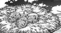 Jaja Pelikana Jedzącego Góry