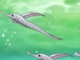 Doctor Fish