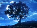 Mooncake Tree