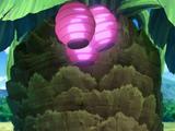 Sakeyashi Fruit