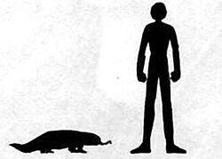 Sanzu River Poison Lizard size