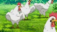 Chickringtosset Eps 88