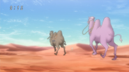 Water-Storage Camels Eps 62