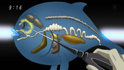 PufferFishWhaleAnatomy