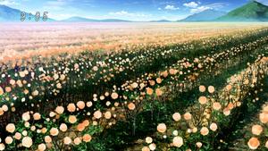 Apricotton Field Eps 38