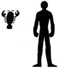 Tsuchinoko Shrimp silhouette