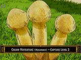 Cream Mushroom