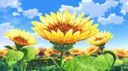 Corona Sunflower
