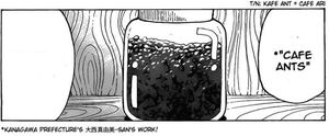 Café Ant