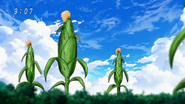 Small BB Corn Eps 20