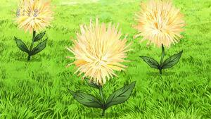 Roślina Serowych Nitek
