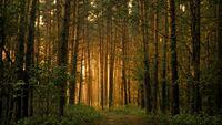 Falling-asleep-forest