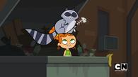 Izzy scares raccoon