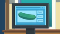 What is a cucumber