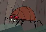 Giantcochroach