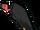 Kondor.png