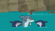S05E01 Rekiny pocieszają Kła