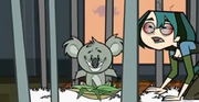 Australia gwen hungry koala