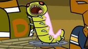 Żywa larwa jako posiłek