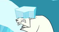 Niedźwiedź polarny oberwał lodem