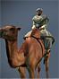 Camel Warriors NTW Icon