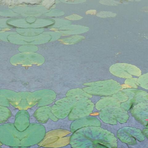 El Estanque del Sapo Gigante visto en Phantasmagoria of Flower View