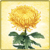 Item-Chrysanthemum
