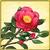 Item-Camellia