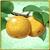 Item-Pear
