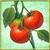 Item-Tomato