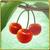 Item-Cherry