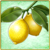 Item-Lemon